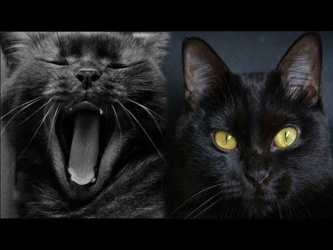 Черные кошки (Сериал 2013) смотреть онлайн бесплатно