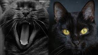 Фильм Чёрные кошки(Black Cats)