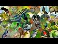 Kolibri Ninja Kombinasi Kutilang Ribut Pikat Semua Jenis Burung  Mp3 - Mp4 Download