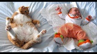 Best Funny Kids Video With Cats- 2019- Unlimited Fun