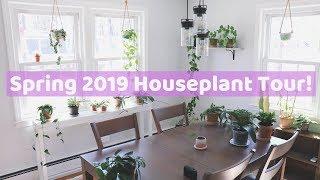 Houseplant Tour! 🌿 🌸 | Spring 2019 | Part One