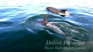 Dauphins Bretons (tursiops)  Lannion Music : Rare Bird Sympathy