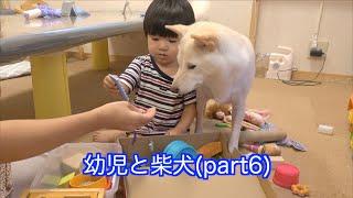 幼児と柴犬part6
