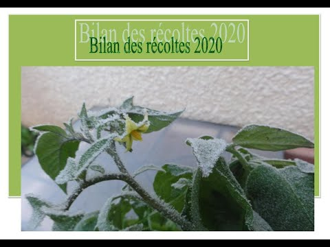 107-bilan-des-récoltes-2020-dans-petit-jardin-urbain,-recette-butternut-farcie-au-quinoa
