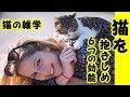 👀【猫 雑学】猫を抱きしめモフることで 得られる6つの効能・招き猫ちゃんねる