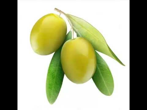 is olive a fruit harvesting the fruit