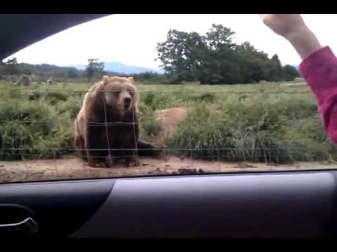 знакомства на превед-медвед