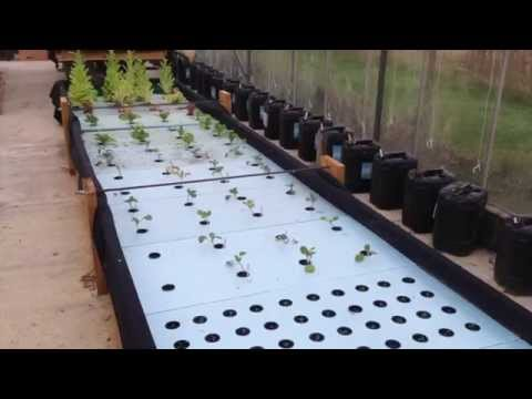 Chilli Farm – Aquaponics – November 2014