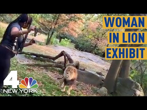 Curtis - Dumb Woman Climbs Into Lion Exhibit At Bronx Zoo