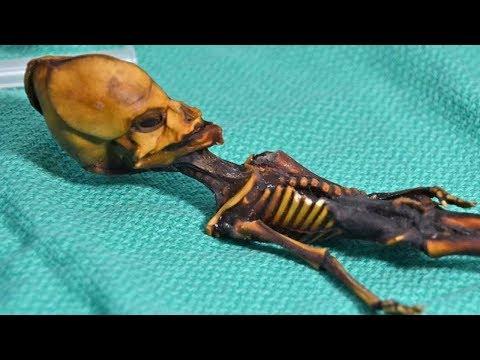 Atacama Desert's Mummified Skeleton