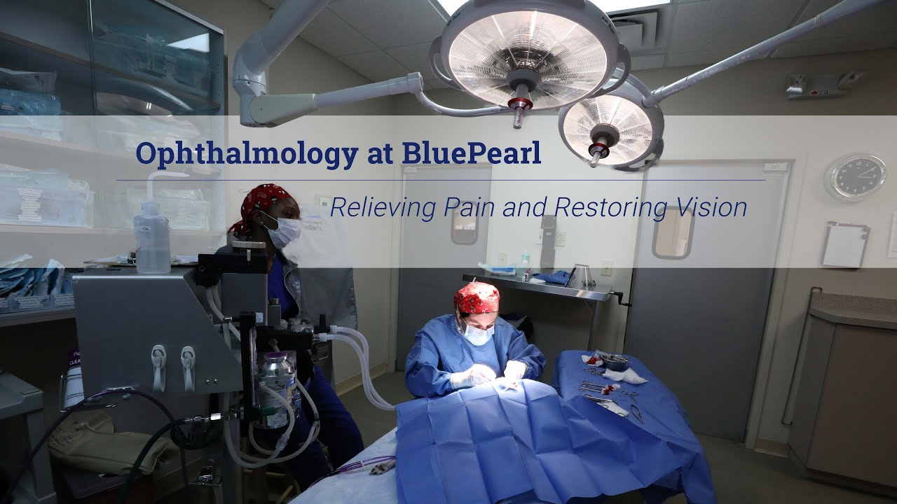 Ophthalmology Bluepearl Pet Hospital