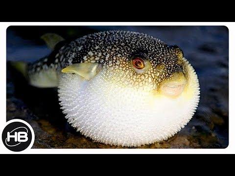 САМЫЕ НЕОБЫЧНЫЕ РЫБЫ В МИРЕ. Рыбы монстры