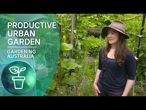 A highly productive small-scale urban garden