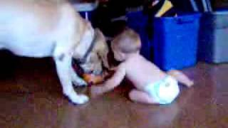 baby and dog sharing toy