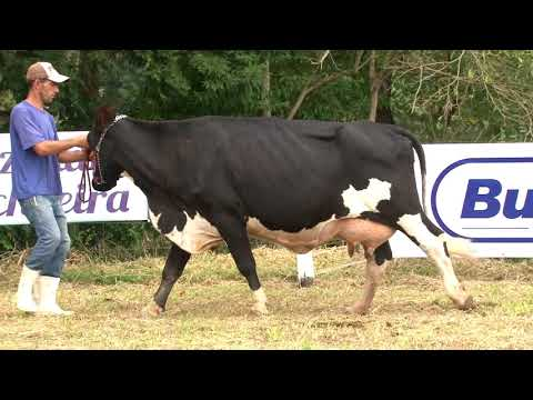 LOTE 5   9586 T