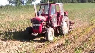 Špartanje kukuruza-Kultivacija-Corn cultivation