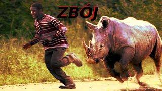 Szalone ataki nosorożców na samochody i ludzi !!!