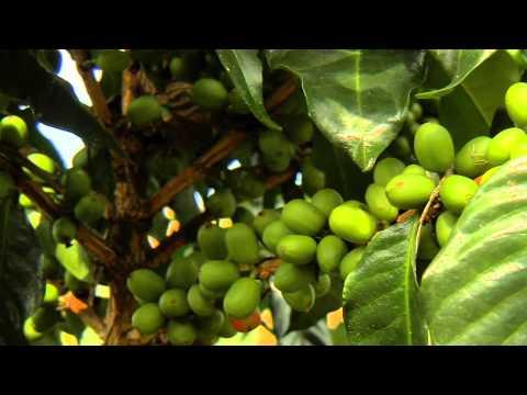 Café de Colombia desde Montes de la Castellana