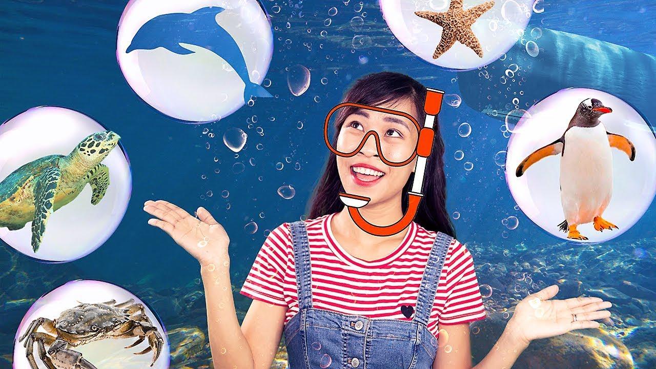 Khám phá đại dương   Bé học nói tên SINH VẬT BIỂN bằng tiếng Việt và tiếng Anh   Kim Happy Kids