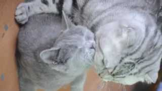 Allan & Lucky - Love story