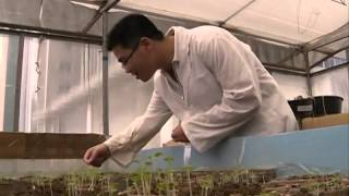Chemical discovered to fight soil pollution