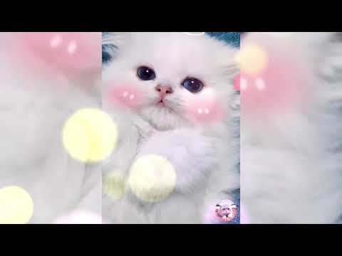 Baby Cats - Cute and Funny Cat Videos Compilation | Aww Animals