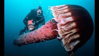 Тип Кишечнополостные. Почему Медузы и Кораллы родственники?