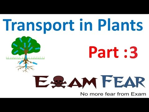 Biology Transport in Plants part 3 (Diffusion in plants, typ