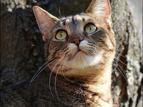 У кошек 9 жизней. Почему?