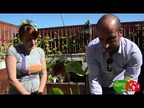 El jardinero en casa c tricos doovi for Jardinero en casa