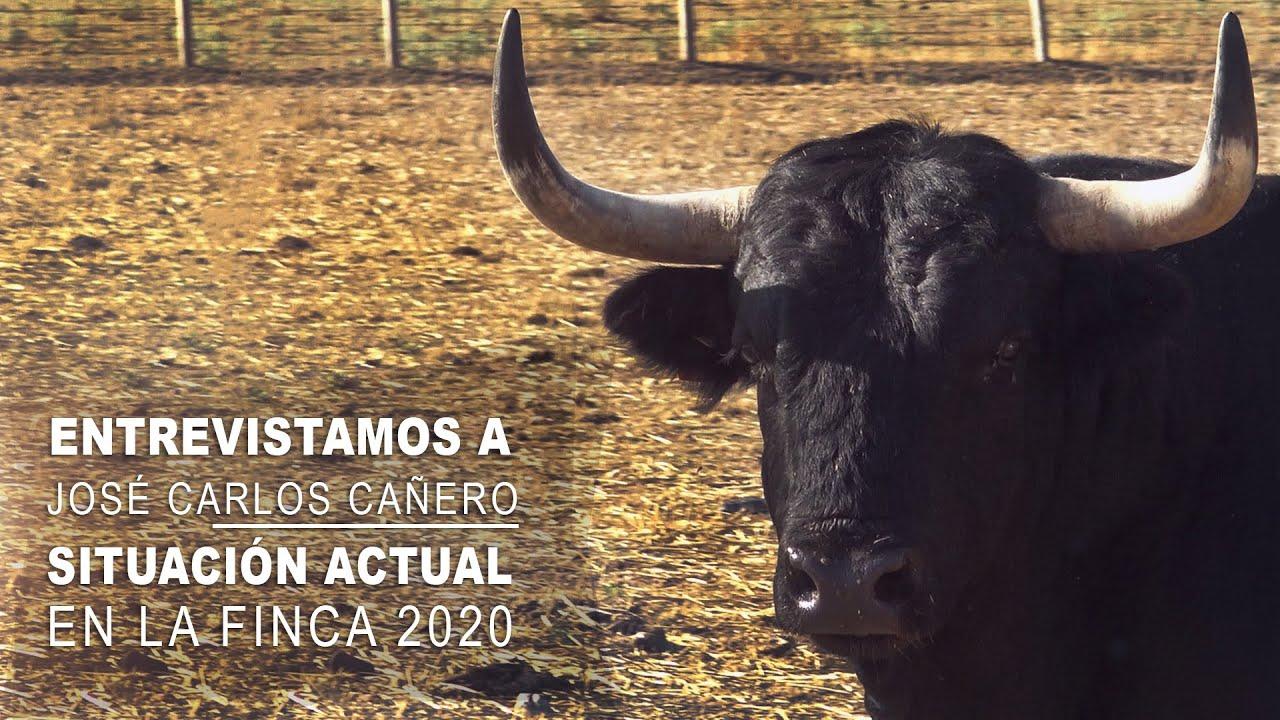 Los Toros Bravos De Morquera Entrevistamos A Cañero Situación Actual En El Campo Bravo 2020 Youtube