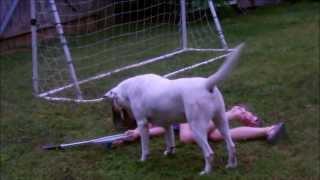 How To Tire Out A Labrador Retriever