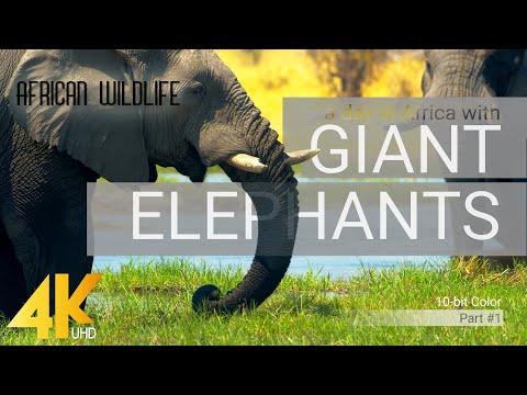 4K African Wildlife: