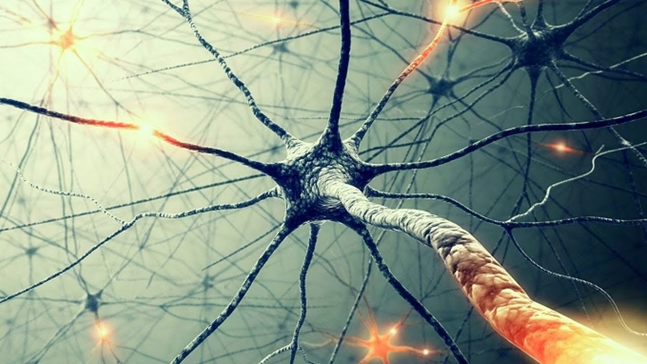 Бог в нейронах