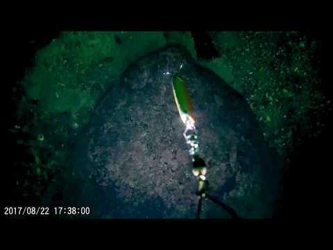 Angeln in Norwegen, Farsund - Unterwasserkamera filmt Hai