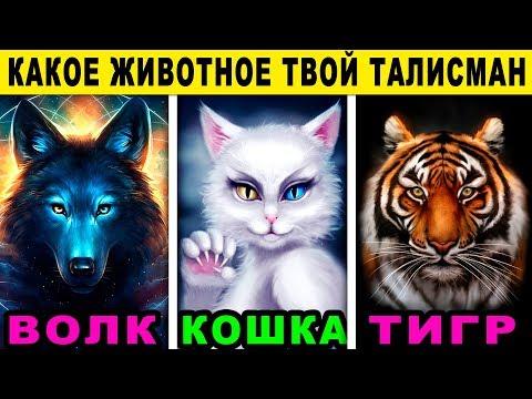 Вопрос: Кто вам больше по душе кошки или собаки?