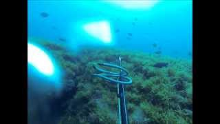 Spearfishing at the Frying Pan Tower - Wilmington, NC - 18 May 2013