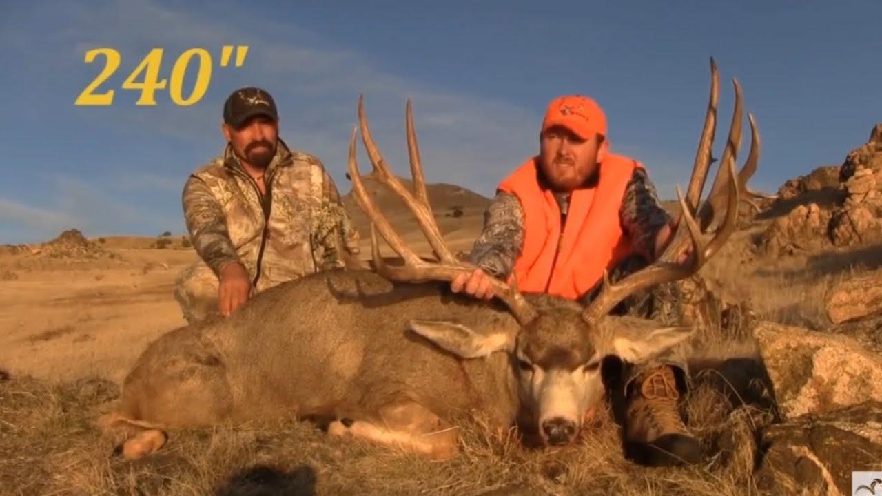 Biggest Mule Deer Ever Killed – kitchen