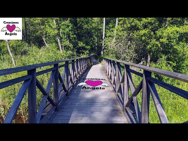 REFLEXIÓN 🦋 Cruzar el Puente