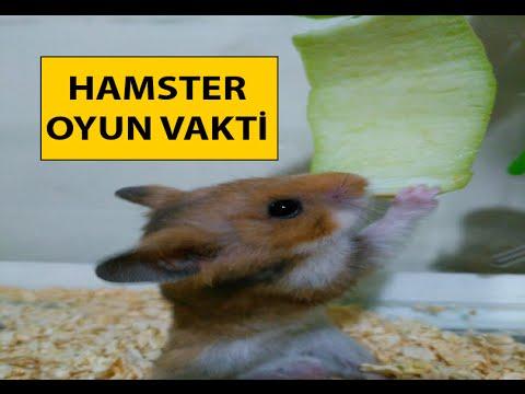 Hamster Oyun Vakti