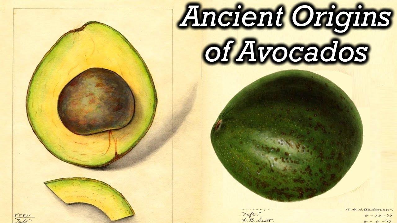 The Strange History of Avocados