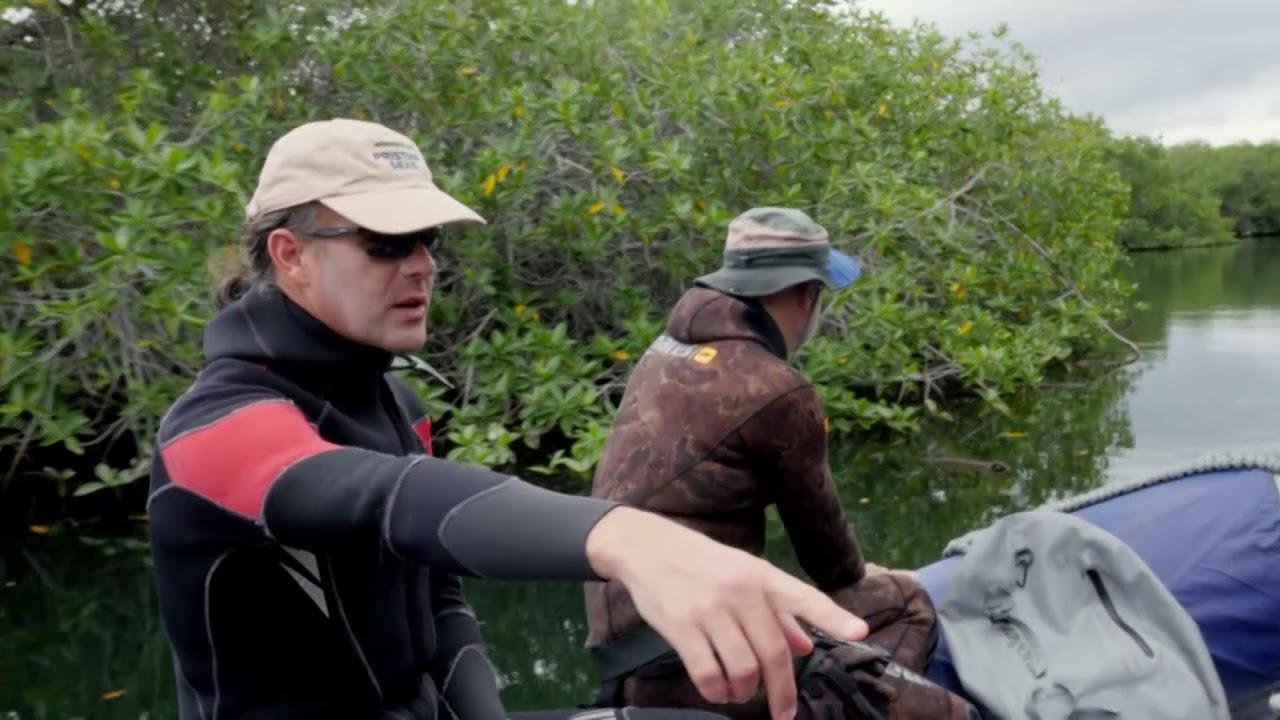 Galapagos | Extrait : La biodiversité de l'archipel