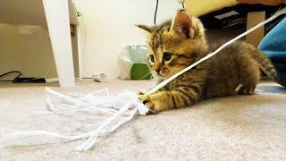 超元気に遊びまわる保護猫