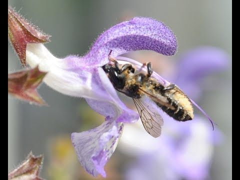 Pesticides in 'bee friendly' plants sold in garden centres