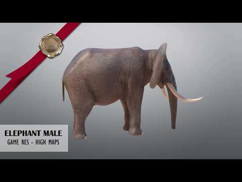 African CGI Elephant Male