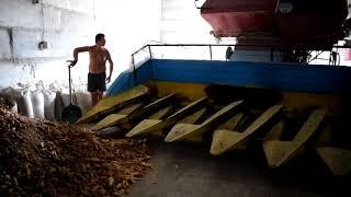 Як ми качани кукурудзи молотили