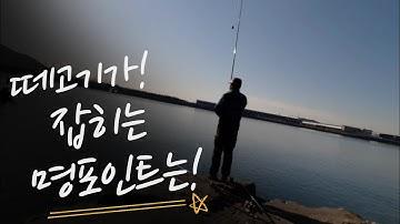 [숭어꽃낚시(봉낚시)] 진해 최고의  명포인트!!!  # 숭어낚시 # 떼 고기가 잡히는 이곳