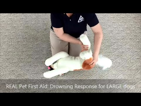drowning first aid response essay The first step when developing an emergency response plan is to conduct a risk assessment to identify potential first aid and cpr by trained employees can.