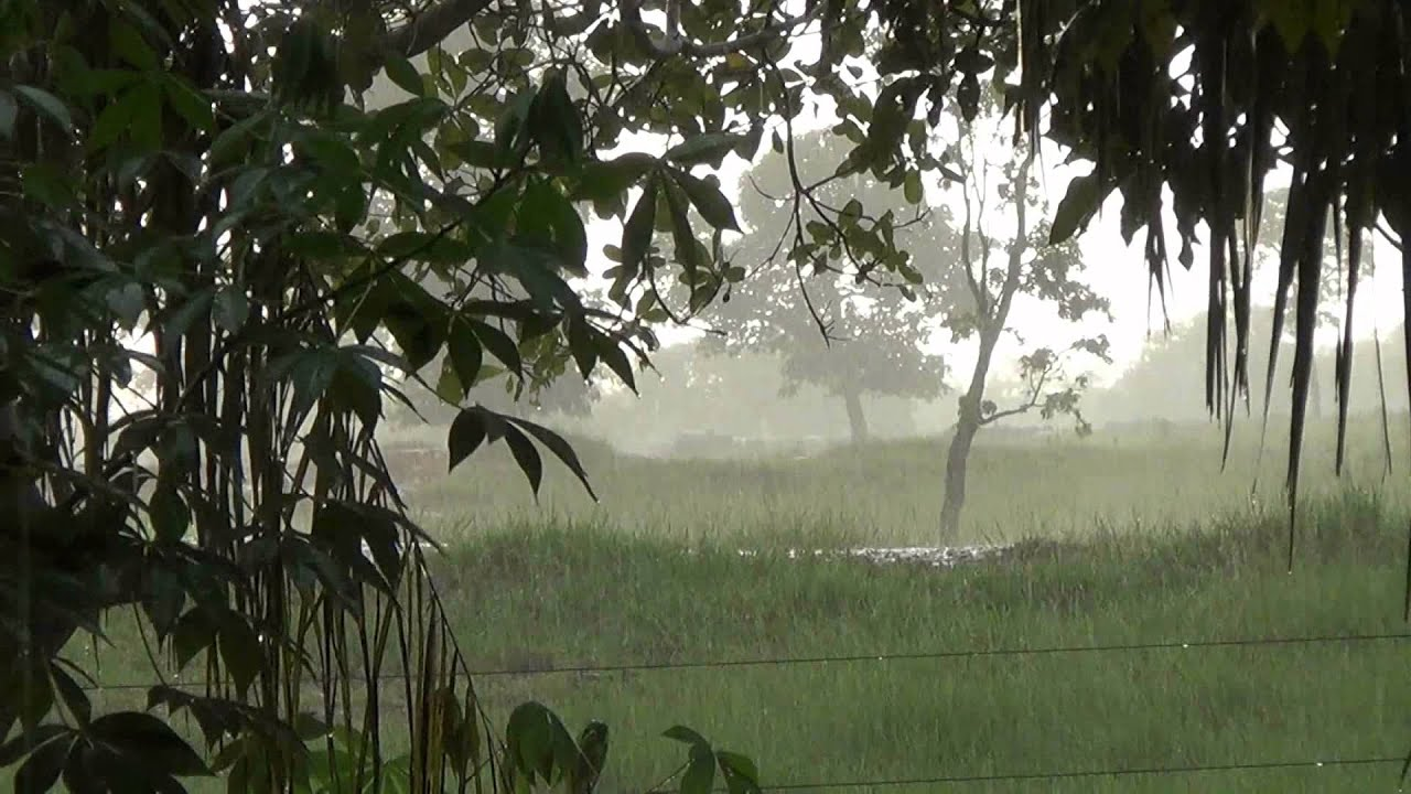 Sons da natureza chuva na fazenda simplicidade relaxamento contemplação