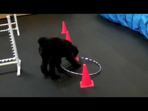 Hula Hoop Dog